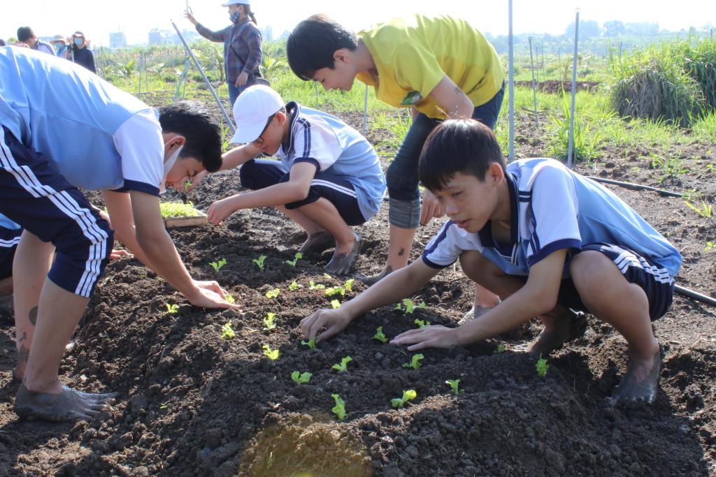 Hoạt động trồng rau