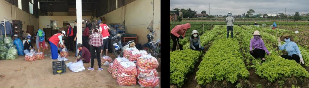 CB-GV-CNV  nhà trường đã tham gia  thu gom  và vận chuyển hàng chục tấn rau, củ, quả ủng hộ nhân dân TP Hồ chí Minh và các tỉnh Miền Nam trong đại dịch Covid 19
